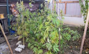 Úspešný drogový zásah kriminalistov v Žiari nad Hronom